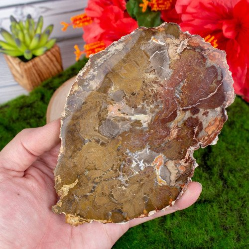 Large Petrified Wood Slice