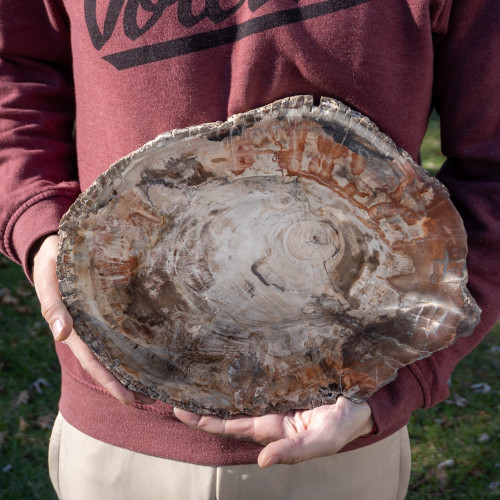 XL Petrified Wood Slab