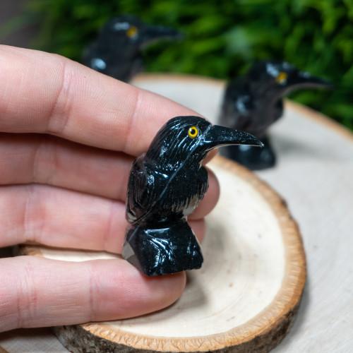 Baby Onyx Raven