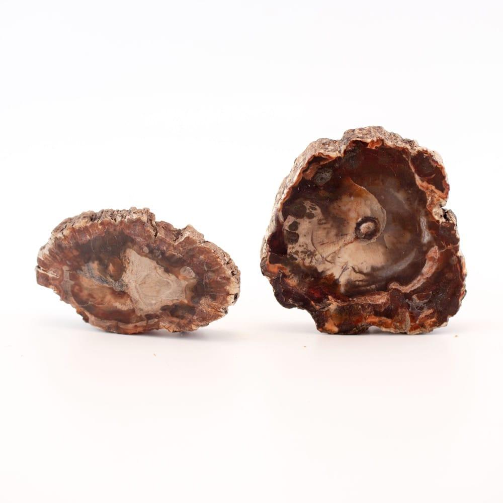 Petrified Wood Hand Slices