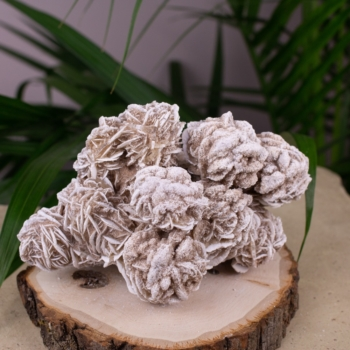 Desert Rose Selenite #15
