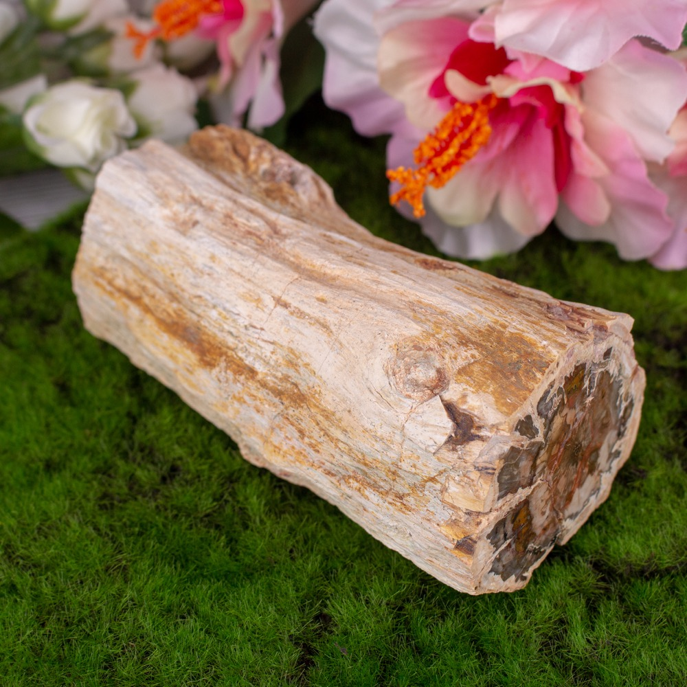Petrified Wood Branch