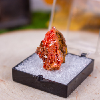 Raw Crocoite in Display Case