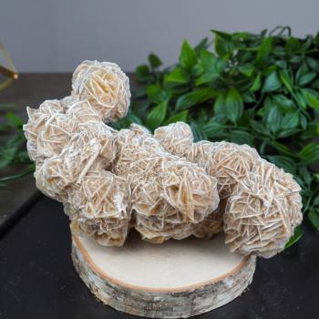 Large Desert Rose Selenite Cluster