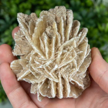 Large Desert Rose Selenite Rosette